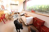 北歐寵物旅館_北歐犬舍有限公司工作環境